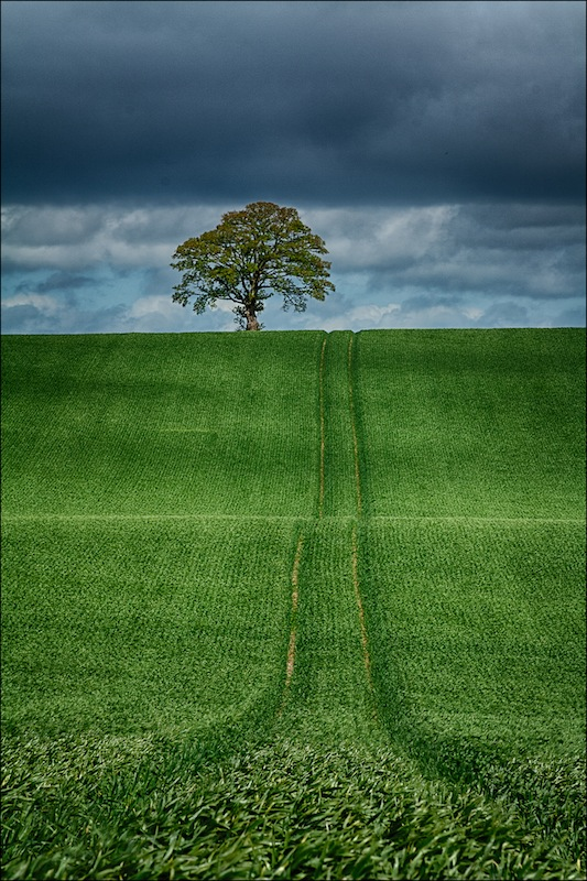Lone Tree Hill, Eddie Doherty, Drogheda Photographic Club