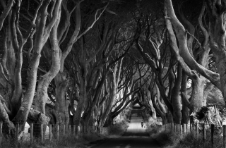 1-dark-hedges-tom-quilty-waterford