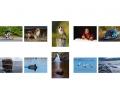 Des Glynn LIPF, Galway Camera Club.jpg