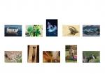 Richard Boyle LIPF, Offshoot Photographic Society