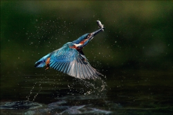 Catch of the Day, Des Connors, Breffni Camera Club