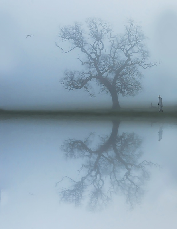 Walk in the Park, Eric O'Neill, Drogheda Photographic Club
