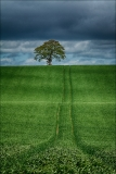 Lone Tree Hill, Eddie Doherty, Drogheda Photographic Club