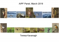 Theresa Kavanagh, AIPF, Palmerstown Camera Club