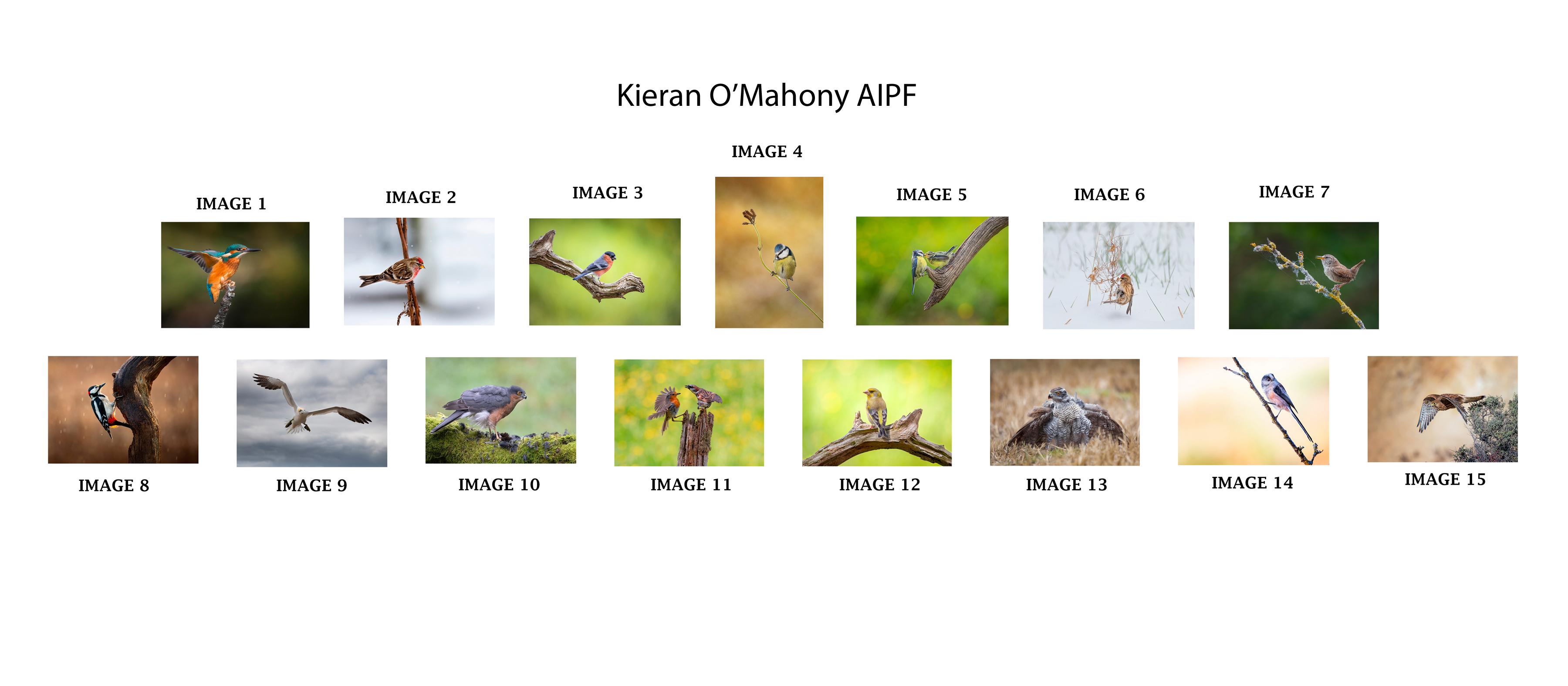 Kieran O'Mahony, AIPF, Mallow Camera Club