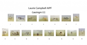 Laurie Campbell AIPF, Catchlight CC