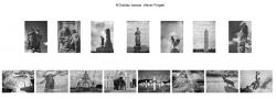 Chris Ducker AIPF, Dublin Camera Club