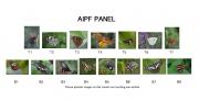 Ann Francis AIPF, Cork Camera Group