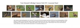 Tom  Ormond AIPF, Celbridge Camera Club Statement