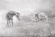 Horse and Bike, Vadim Lee, Irish Photographic Federation