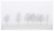 Trees in Mist, Charlie O'Neill, Irish Photographic Federation