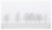 Trees in Mist, Charlie O'Neill, Irish Photographic Federation