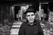 Billy's Goats - Judy Boyle