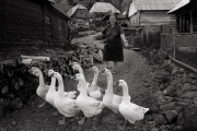 Monochrome Print Individual  Silver Medal -  Des Clinton - \'Geese Woman\' - Drogheda Photographic Club.jpg