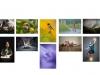 B - Cork Camera Group - Colour