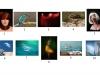 G - Wexford Camera Club - Colour