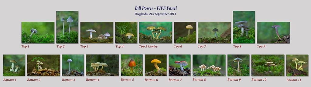 Bill Power FIPF, Mallow Camera Club