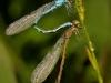 065_zoo-10_10-waterford-cc_n-browne_3-jpg