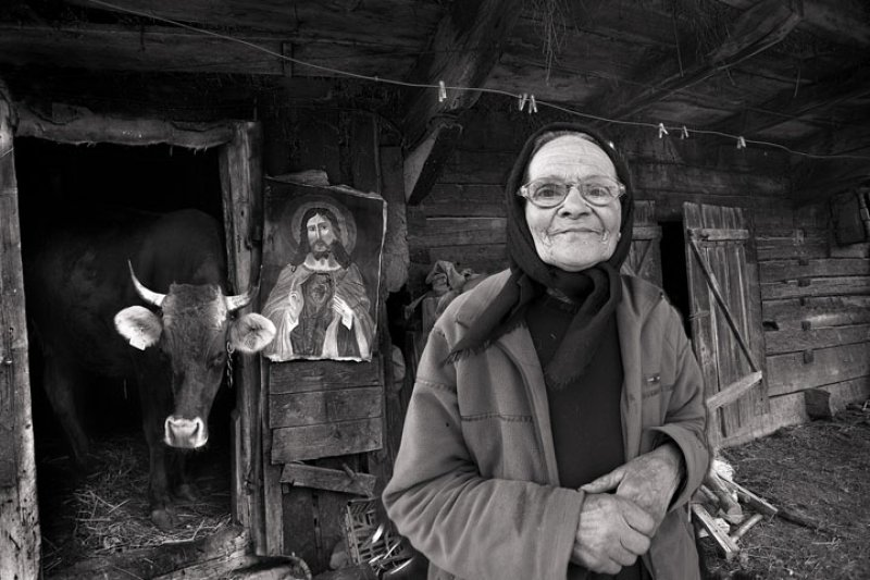Holy Cow - Judy Boyle