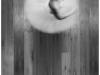 15.-Amys-Twirl-B.Hopper