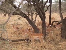 2009_06211africa0052