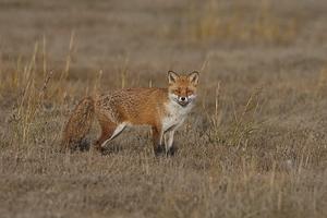 fox-colm-fitzpatrick