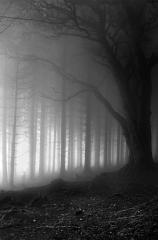 2-silver-pete-bedell-deer-in-mistic-wood