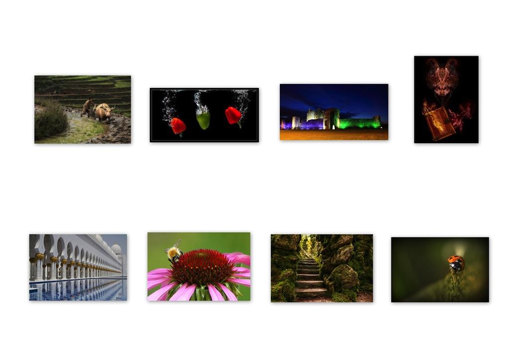 6. Palmerstown Colour