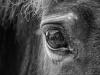 1. wexford_mono_ 1_michelline_murphy_horse