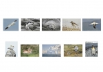 Gerry Butler LIPF, Ennis Camera Club