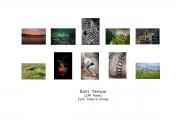 Dani Teston LIPF, Cork Camera Group