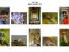 Paul Tips LIPF, Mallow Camera Club