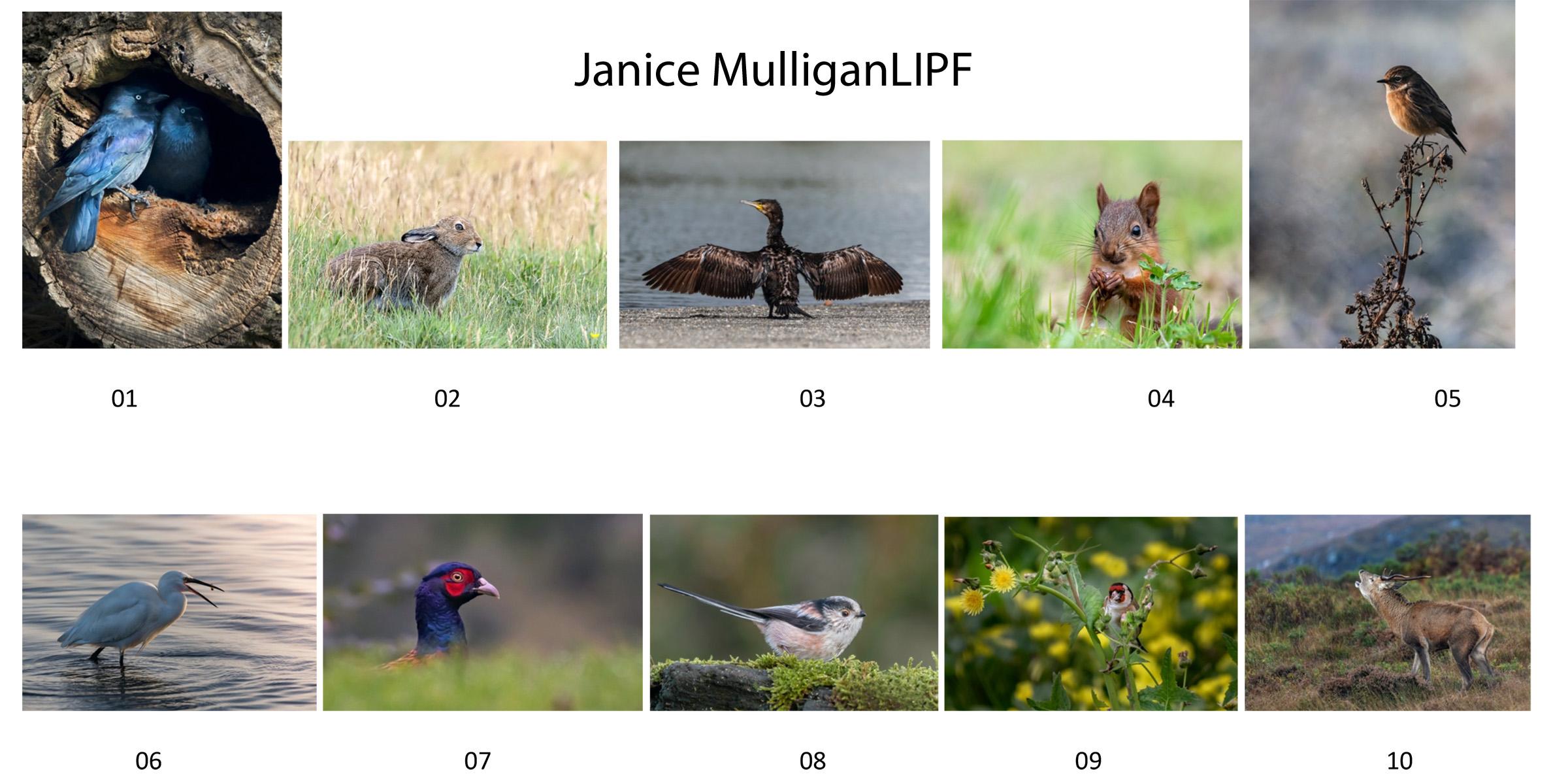 Janice Mulligan, LIPF, Drogheda Camera Club