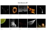 Vito Werner, LIPF, Blarney