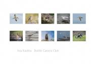 Inta Kaulina LIPF, Dublin Camera Club