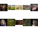 Tadhg Hurley LIPF, Blarney Photography Club