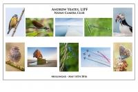 Andrew Yeates LIPF, Navan Camera Club