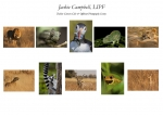 Jackie Campbell LIPF, Dublin Camera Club & Offshoot Photography Society