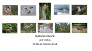 clodagh blake LIPF, thurles camera club
