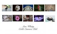 Ann Whitty LIPF, Cobh Camera Club