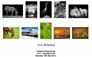 Terry-McParland-LIPF-Panel