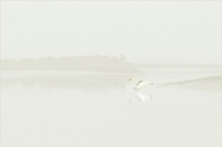 Colour-Bronze-Brian-Hopper-Dundalk-Photographic-Society-Swan-on-the-River