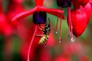 summer-wasp