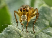 bubblebug
