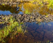 templetouchy-peatland-2