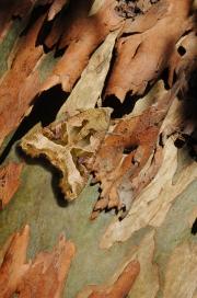 Moth on tree