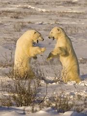 Charlie Galloway - Polar Bear Seconds Away Round 1 - Waterford Camera Club - Print Theme - Advanced First.jpg