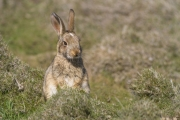 Terry Conroy - Bunny - Portlaoise Camera Club - Projected Natural World - Advanced Honourable Mention.jpg