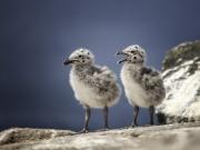Jimmy Meehan - Chicks - Malahide Camera Club - Projected Open - Intermediate Honourable Mention.jpg