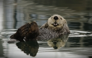 Patty Connor - Sea Otter - Waterford Camera Club - Projected Open - Intermediate Bronze.jpg